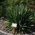 Ogród Botaniczny w Zielonej Górze