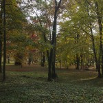 Kargowa - Park