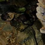 Zielonogórska Pamiarnia - Żółwie