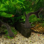 Zielonogórska Pamiarnia - Akwarium