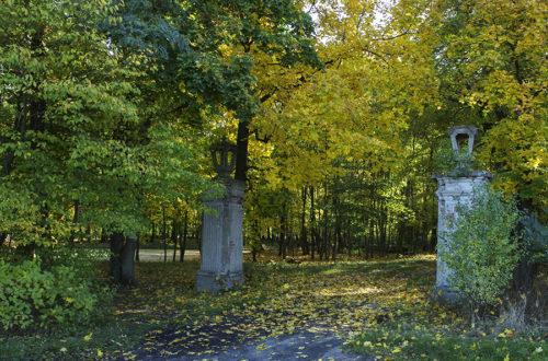 Niwiska - Park pałacowy